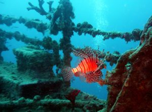 diving-712637_1920